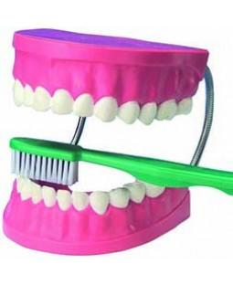 Lær at børste tænder