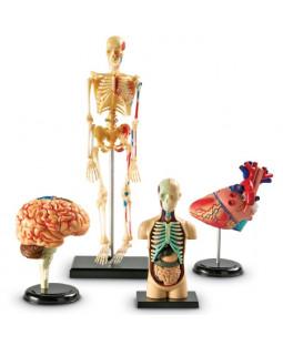Anatomi sæt