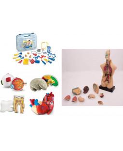 Anatomisæt