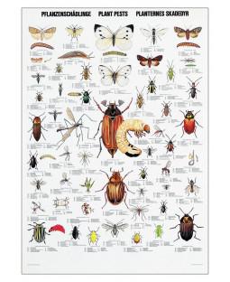 Plakat med insekter